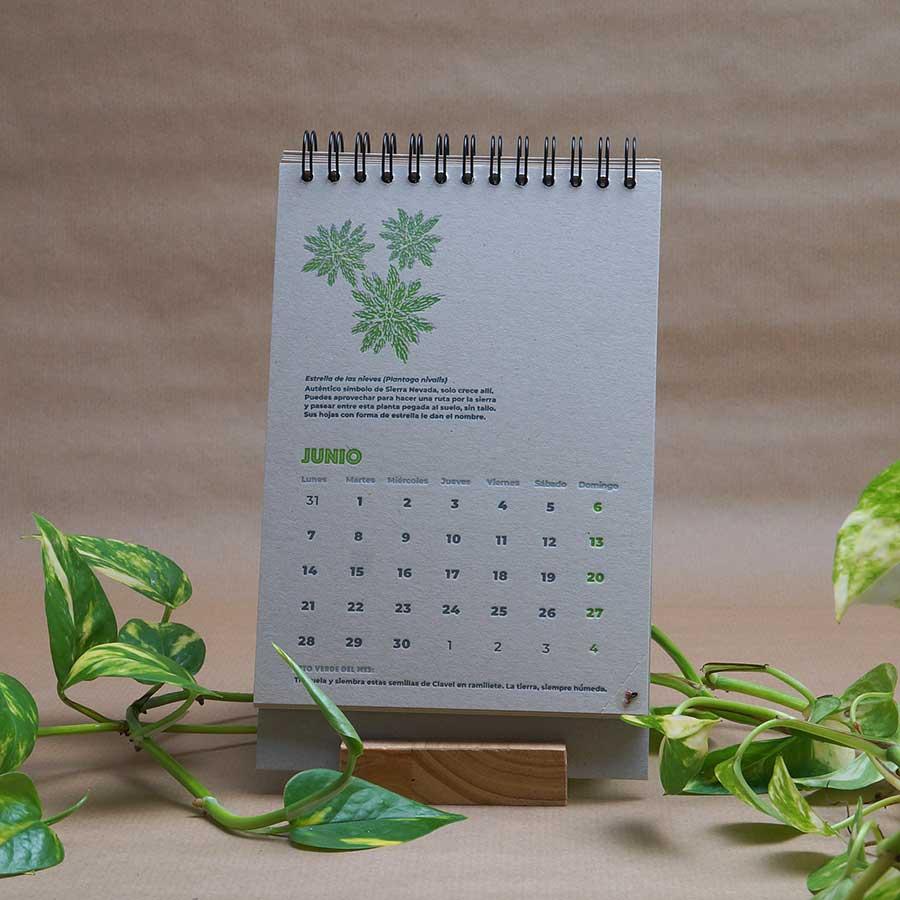Página interior del calendario letterpress 2021, este año dedicado al medio ambiente, con curiosidades naturalistas y retos medioambientales. Mes de junio, Estrella de las nieves impresas a dos tintas