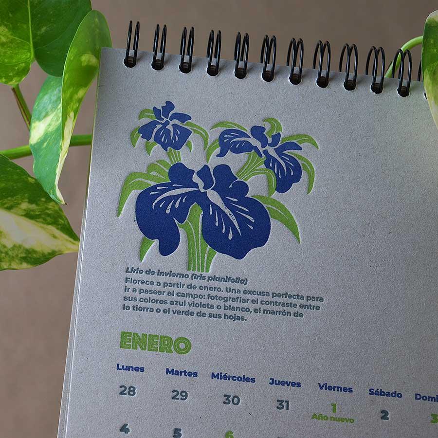 Detalle d Página interior del calendario letterpress 2021, este año dedicado al medio ambiente, con curiosidades naturalistas y retos medioambientales. Lirio de invierno impreso a dos tintas